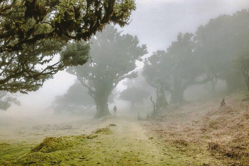 Portugal Madeira Fanal Zauberwald Wandern