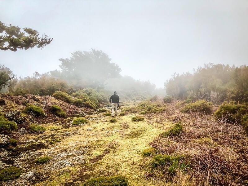 Portugal Madeira Fanal Natur Wandern
