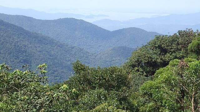 Brasilien Mata Atlantica Tropenwald