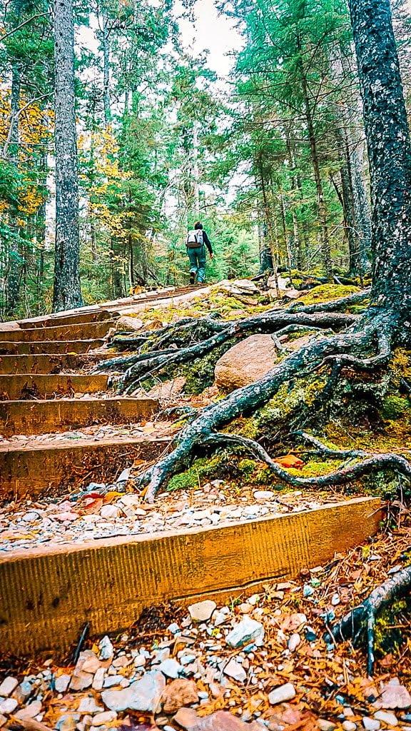 Acadia National Park Indian Summer Wanderung Penobscot Mountain Gipfel wandern Waldweg Wanderweg