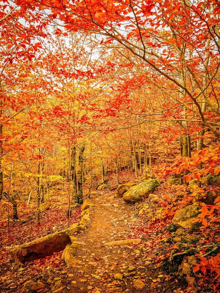 Acadia National Park wandern Indian summer Wanderung Beehive Trail Waldweg Blätter