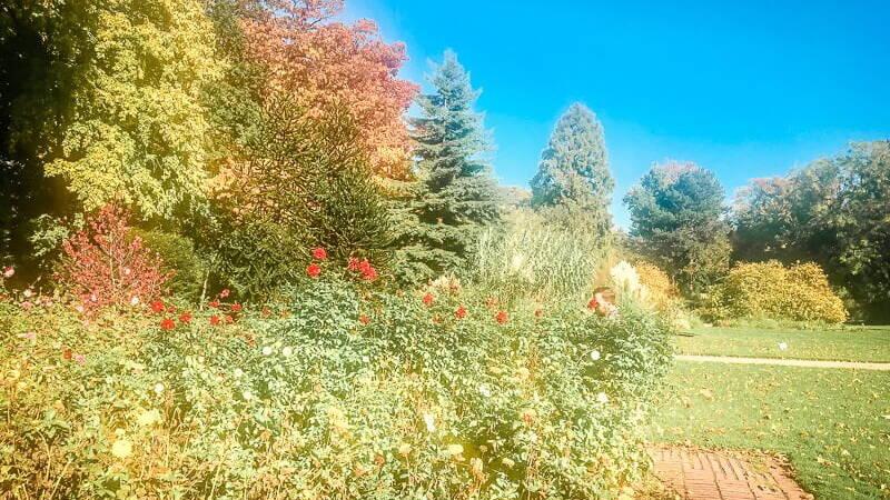 Köln Sehenswürdigkeiten Blumen Pflanzen Flora