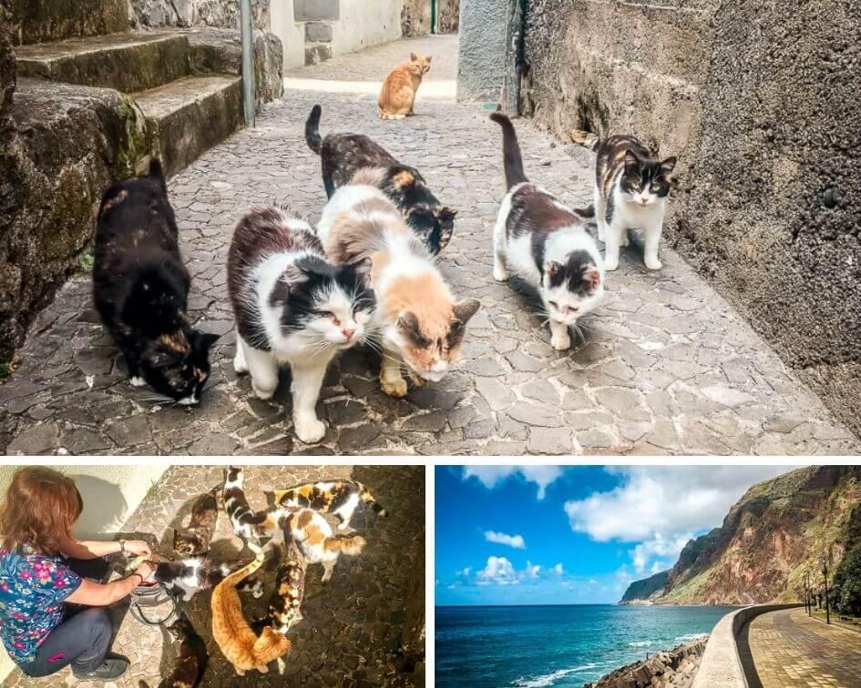 Portugal Madeira Sehenswürdigkeiten Jardim do Mar Katzen