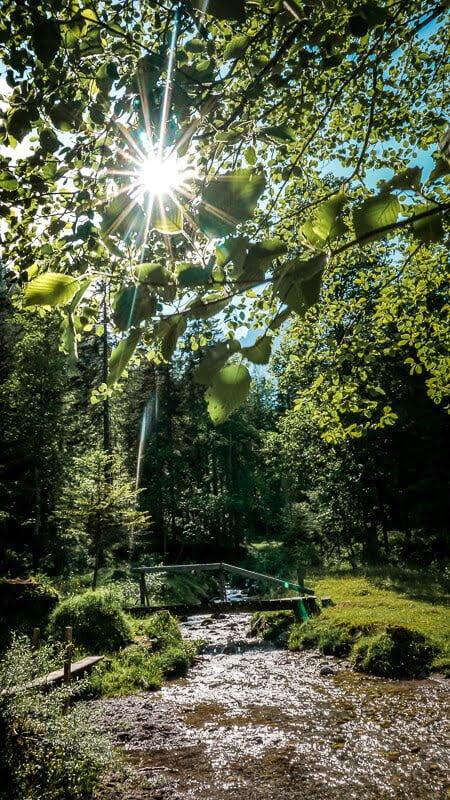 Wilder Kaiser Koasa Trail Wandern Etappe 1 Märchenwald