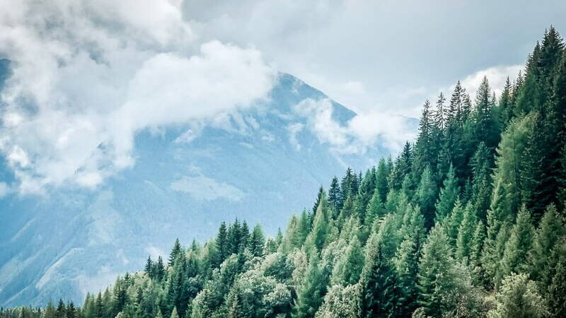 Mölltal Wald und Bergidylle im Nebel