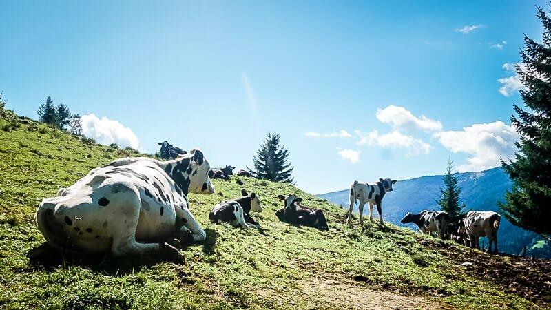 Hohe Tauern Kühe Alpe Adria Trail Marterle