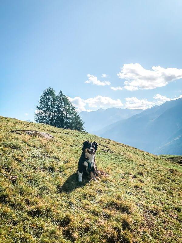 Hund Skye Vandogblog im Mölltal auf dem Abstieg vom Marterle