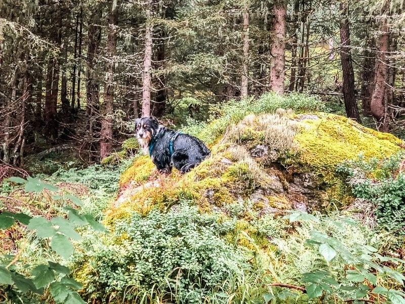 Hund Skye Vandogblog in der Großfragant im Mölltal