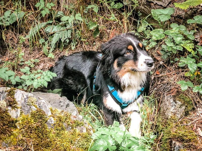 Hund Skye von Vandogblog