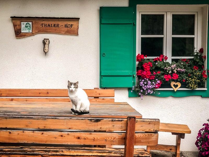Katze am Bauernhof im Mölltal