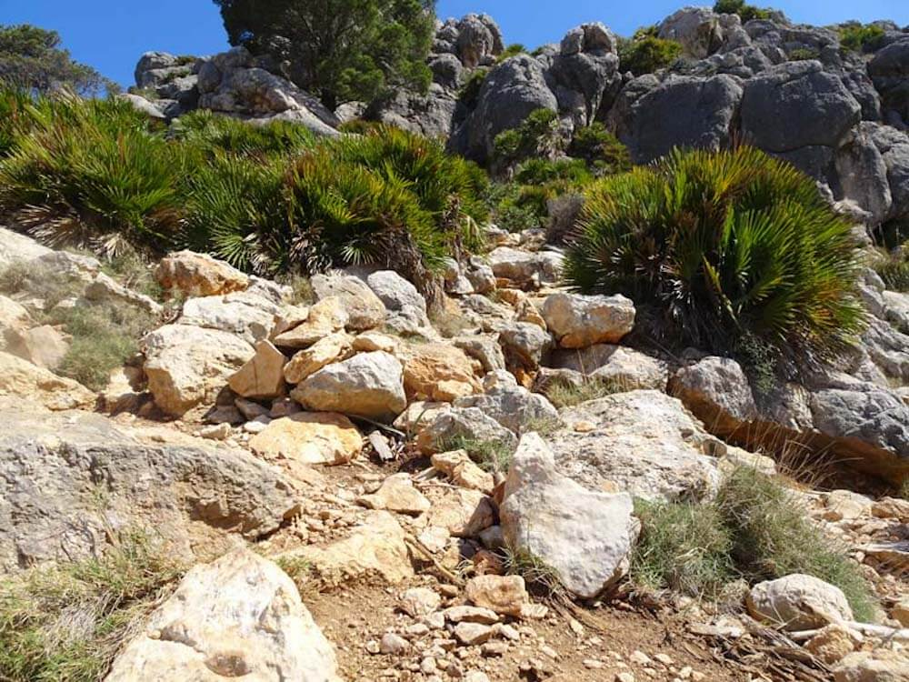 Felsbrocken und Vegetation auf dem Fernwanderweg GR221 auf Mallorca