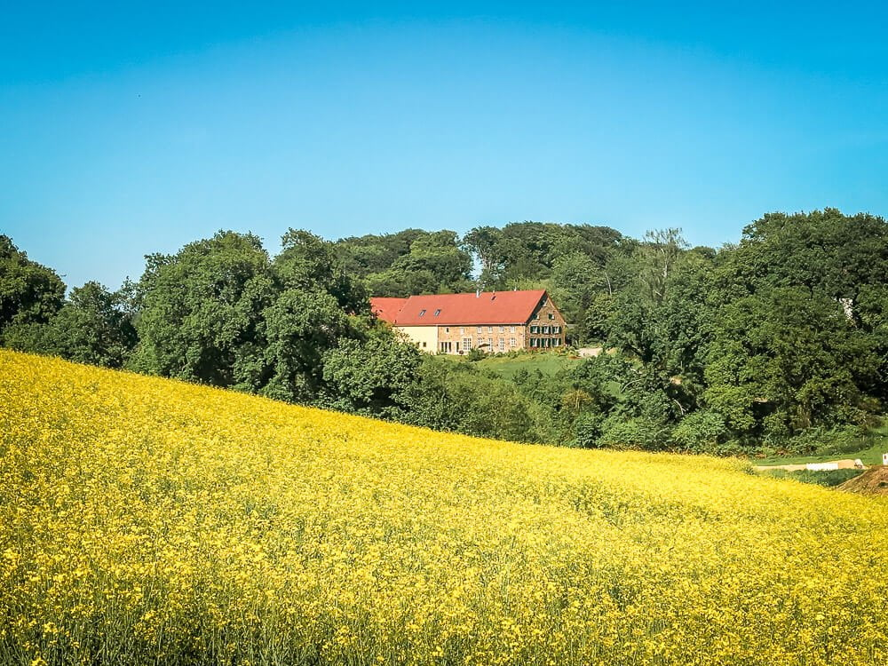 Blühende Rapsfelder beim Wandern im Ruhrgebiet