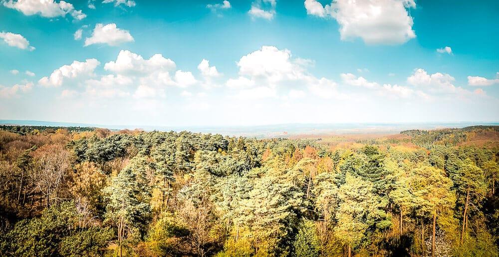 Die Aussicht auf den Wald vom Feuerwachturm in der Haard
