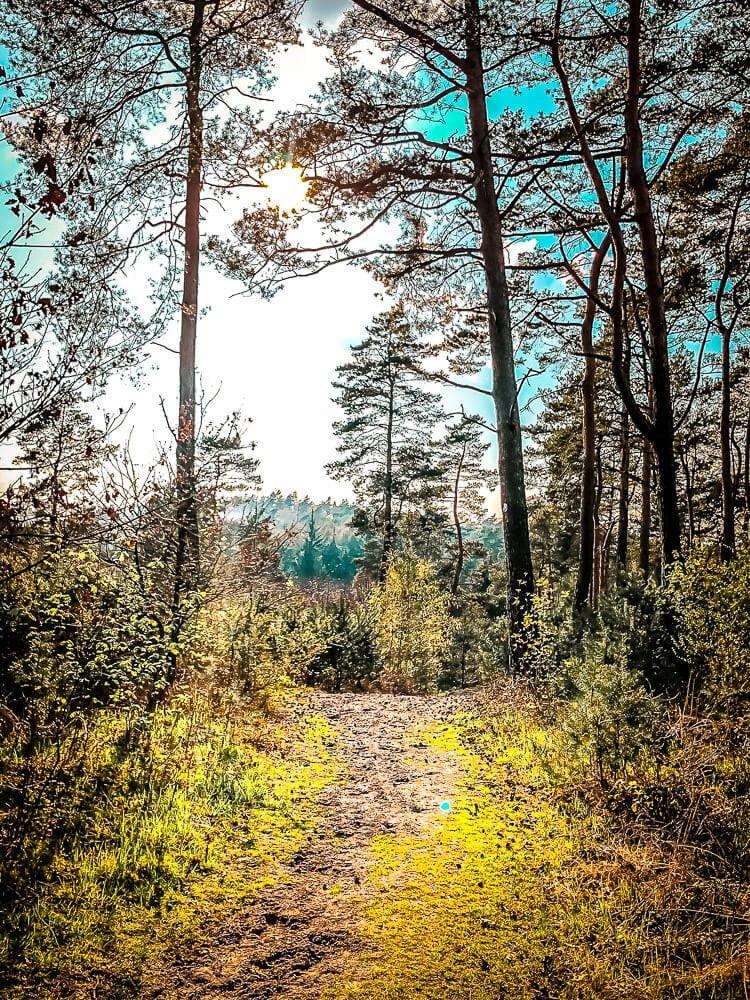 Mountainbike Trail in der Haard im Ruhrgebiet
