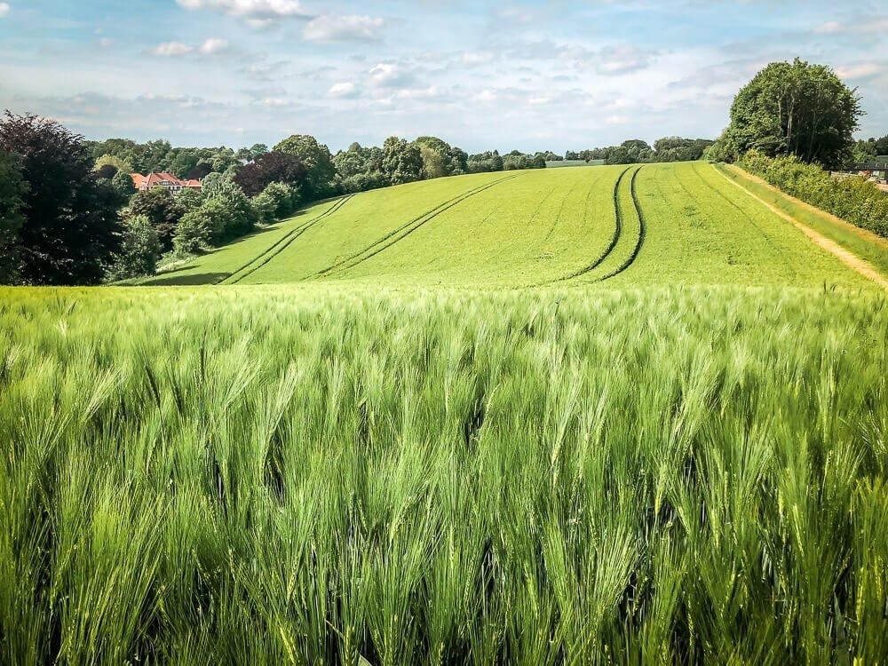 Wandern in den Feldern des Ruhrgebiets
