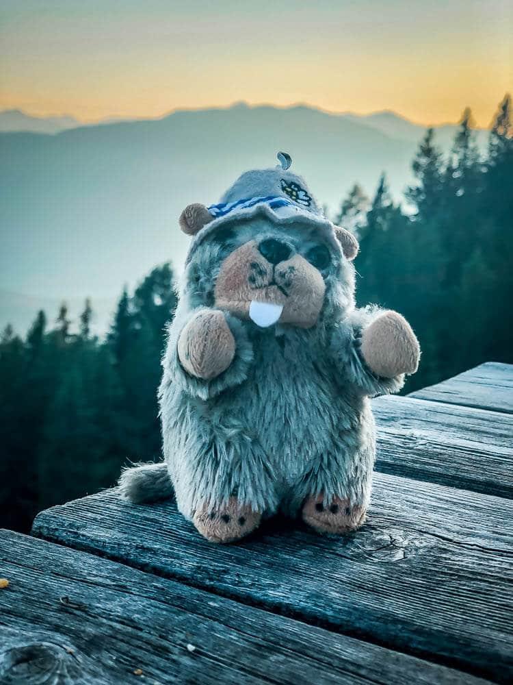 Murmeltier Maskottchen Schorschi genießt den Sonnenuntergang an der Alexanderhütte