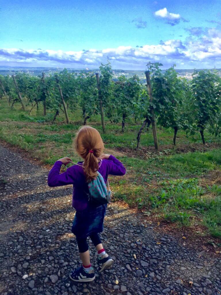 Kind wandert in den Weinbergen des Siebengebirges in NRW