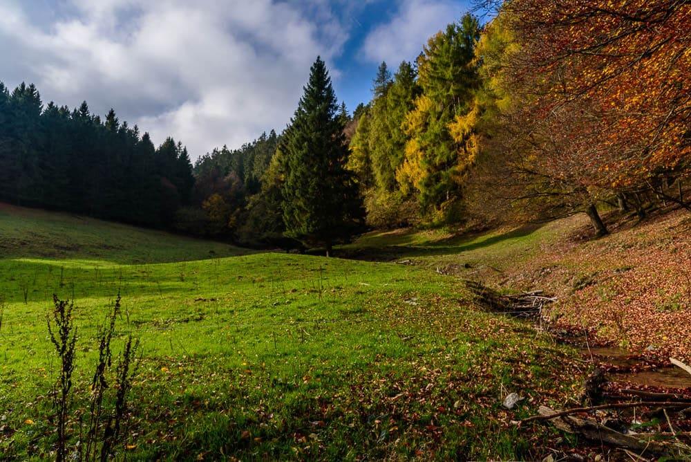 Herbstliche Idylle auf dem Waldweg zum Langenberg im Sauerland