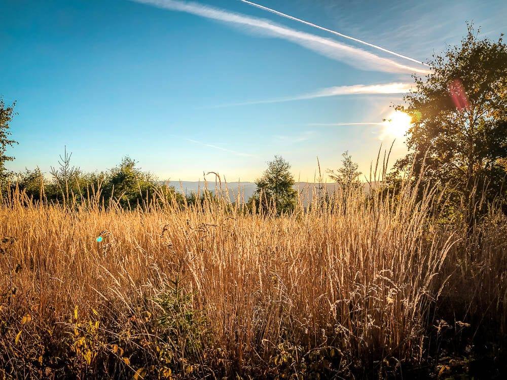 Abendsonne leuchtet auf Feld an den Bruchhauser Steinen im Sauerland
