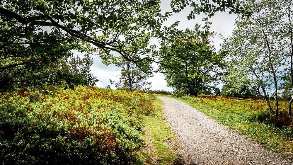 Hochheide Landschaft und Wanderweg auf dem Kahlen Asten