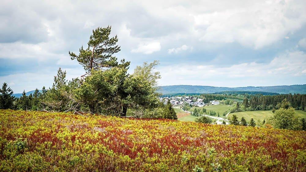 Ausblick über die Hochheide auf dem Gipfelplateau des Kahlen Asten