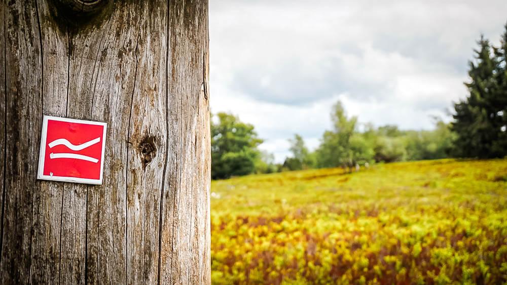 Wandern im Sauerland auf dem Rothaarsteig - Markierung auf dem Kahlen Asten