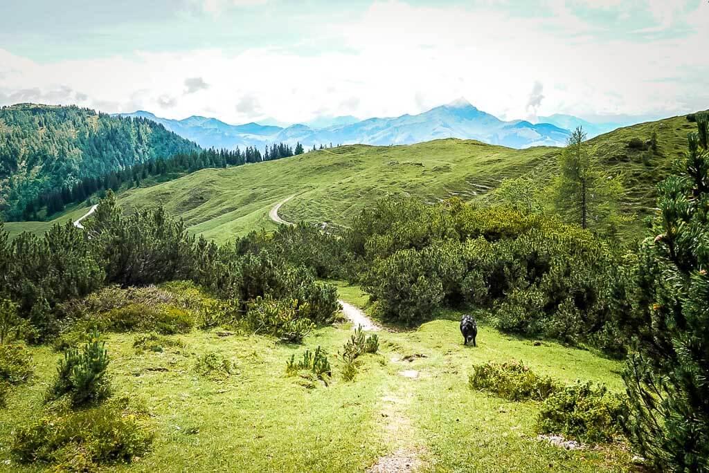 Grasberge und WaiWi Wanderweg in den Kitzbüheler Alpen