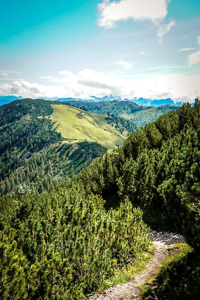 Latschenfelder und WaiWi Wanderweg auf dem Weg zum Kirchberg