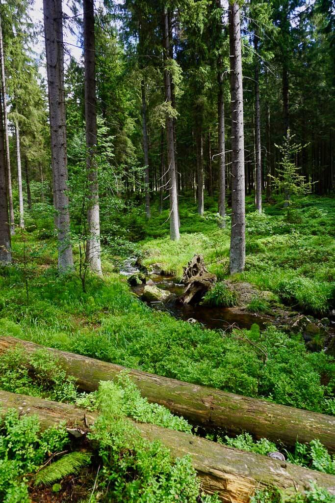Wald und Wildnis beim Wandercoaching im Harz