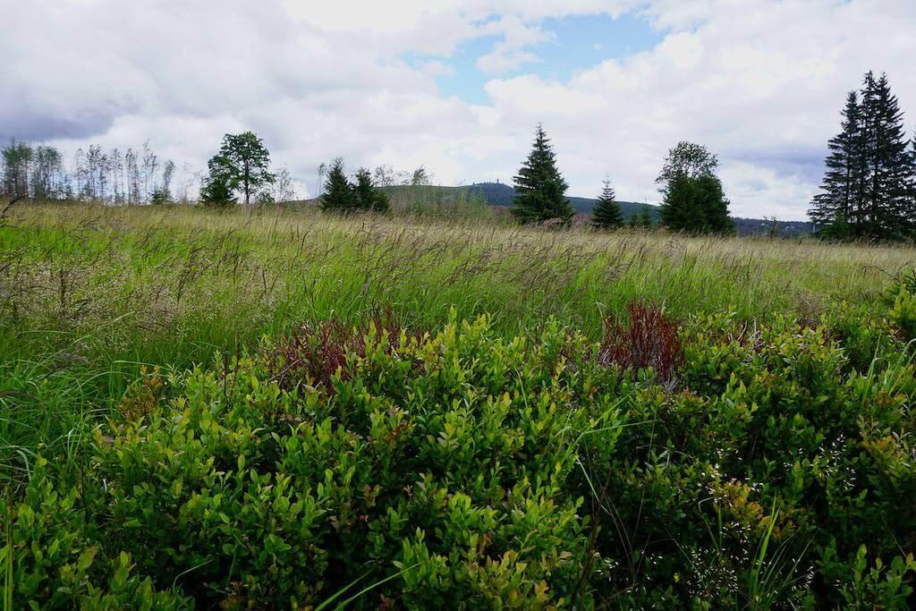 Wilde und unberührte Wiesenlandschaft beim Wandercoaching im Harz