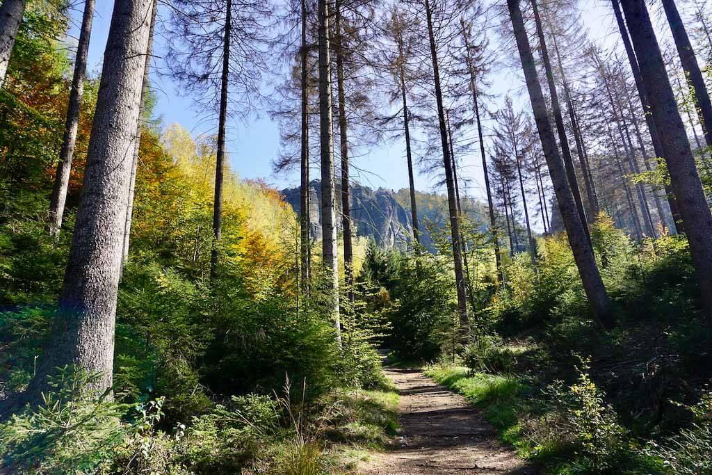 Einsamer Waldweg beim Wandercoaching in der Sächsischen Schweiz