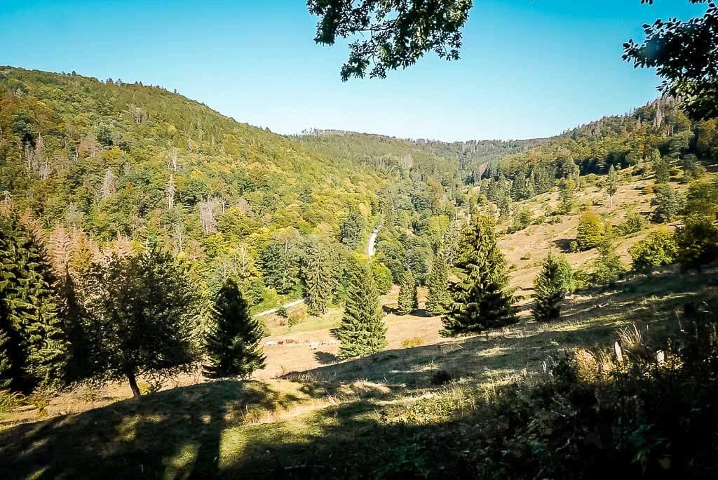 Hundertmorgenwiese am Grünen Band im Naturpark Südharz