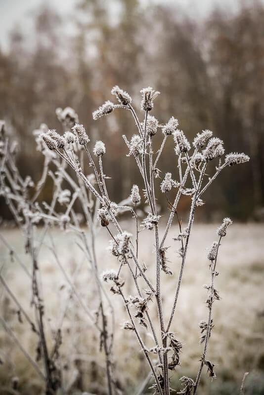Morgenfrost, Raureif und gefrorene Gräser beim Wandern im Neandertal