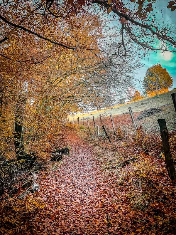 Herbstlicher Wanderweg beim Wandern rund um das Eiszeitliche Wildgehege im Neandertal