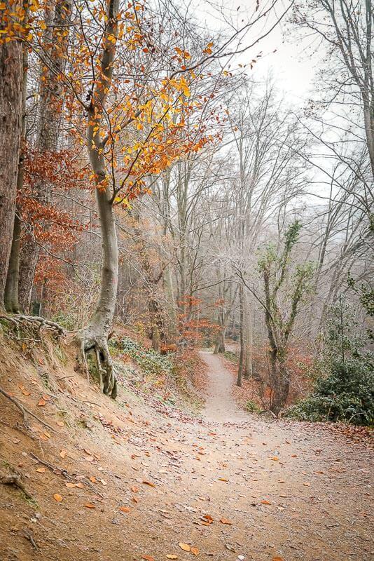 Wandern Rundweg um das Eiszeitliche Wildgehege Neandertal
