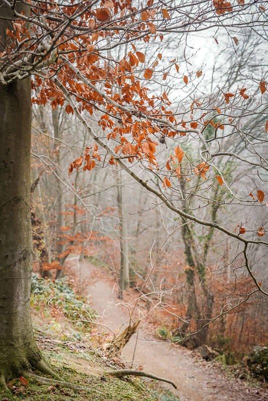 Eiszeitliches Wildgehege Neandertal in Mettmann - Wanderweg