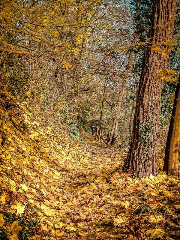 Herbstlicher Wanderweg beim Wandern um das Eiszeitliche Wildgehege Neandertal