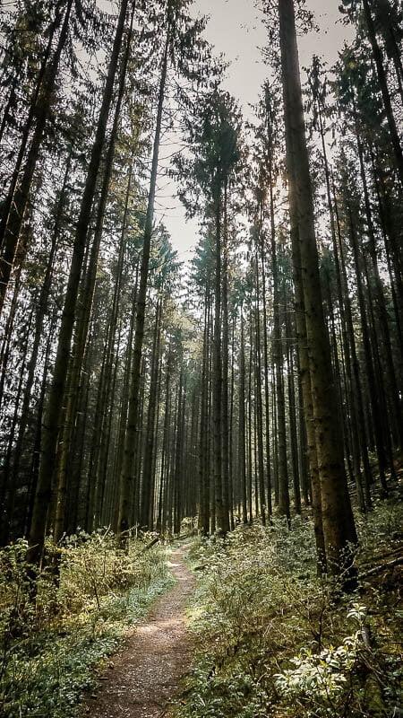 Bergisches Land Wandern bei Altenberg auf einem Waldweg