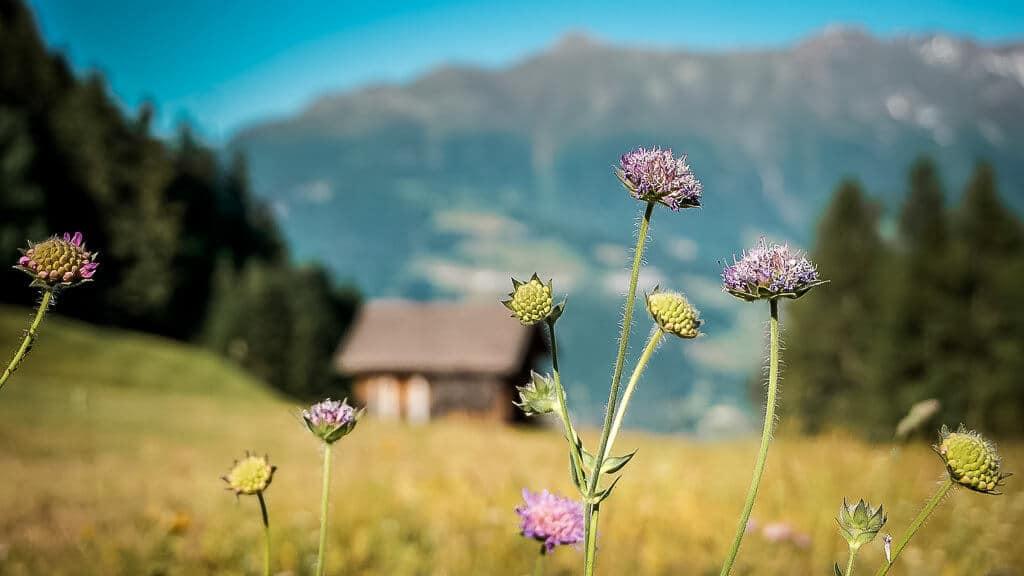 Bergblumenwiese und Almhütte in Serfaus-Fiss-Ladis auf dem Panorama-Genussweg