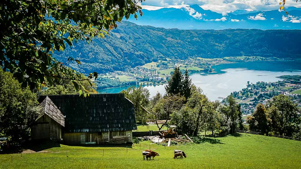 Kärntner Seen - Ossiacher See Bergidylle mit Kühen