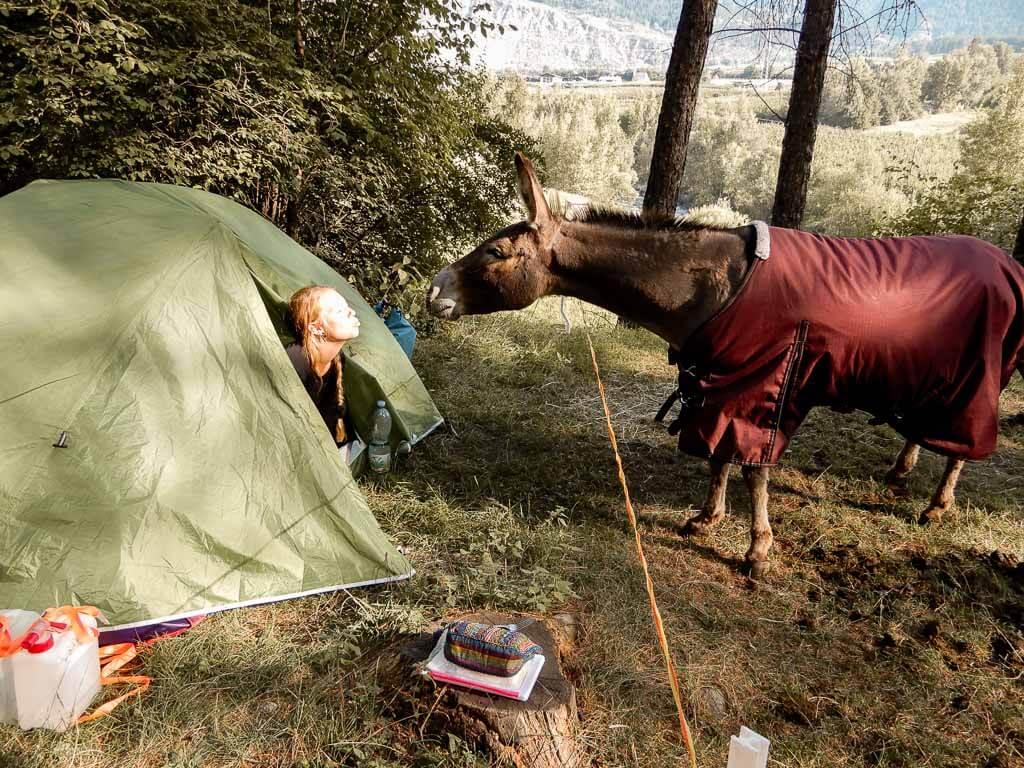 Esel Jonny begrüßt Lotta Lubkoll im Zelt
