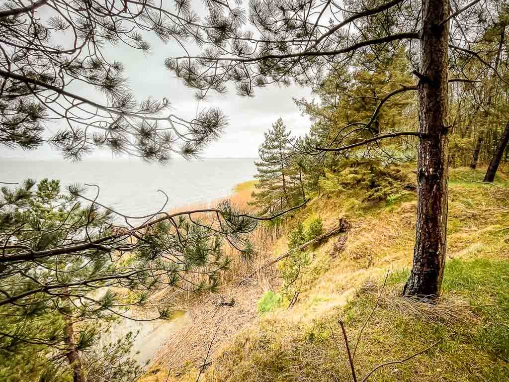 Wald an der Steilküste von Missunde bei Weseby am Ostseefjord Schlei
