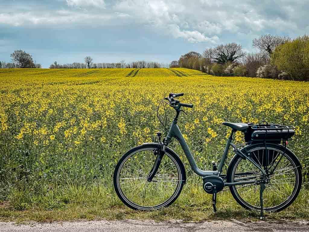 Fahrrad vor Rapsfeld am Ostseefjord Schlei