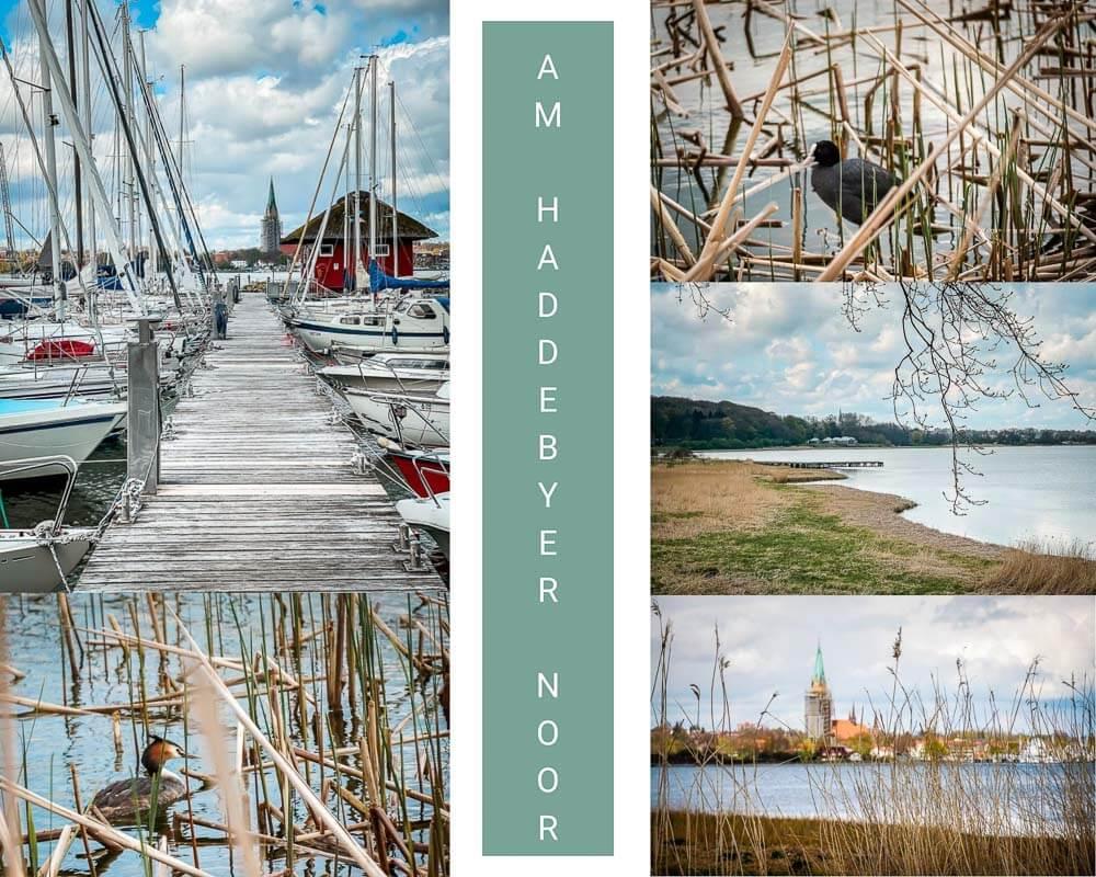 Haddebyer Noor mit Wasservögeln und Haddebyer Hafen am Ostseefjord Schlei