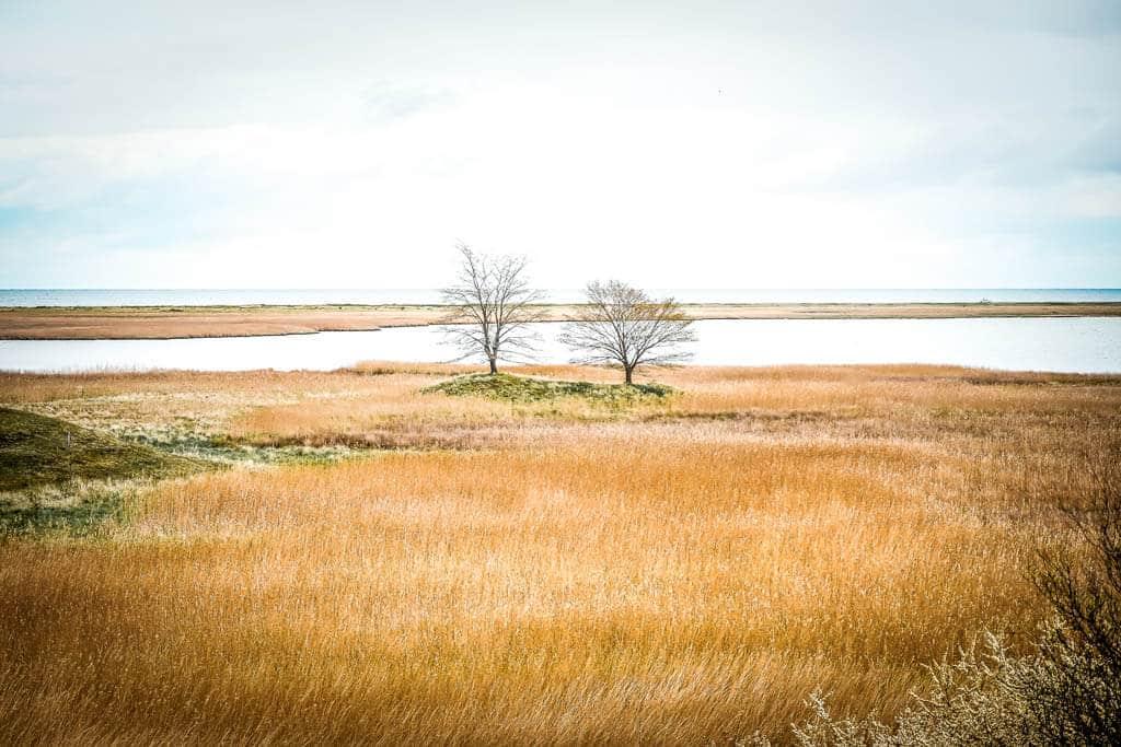 Salzwiesen und Bäume am Ostseefjord Schlei bei Maasholm