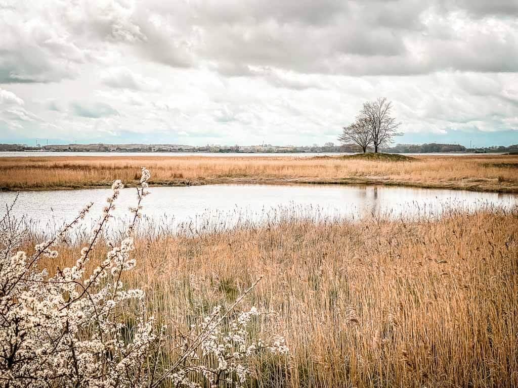Landschaft Idylle mit Salzwiesen im Naturschutzgebiet Oehe-Schleimünde