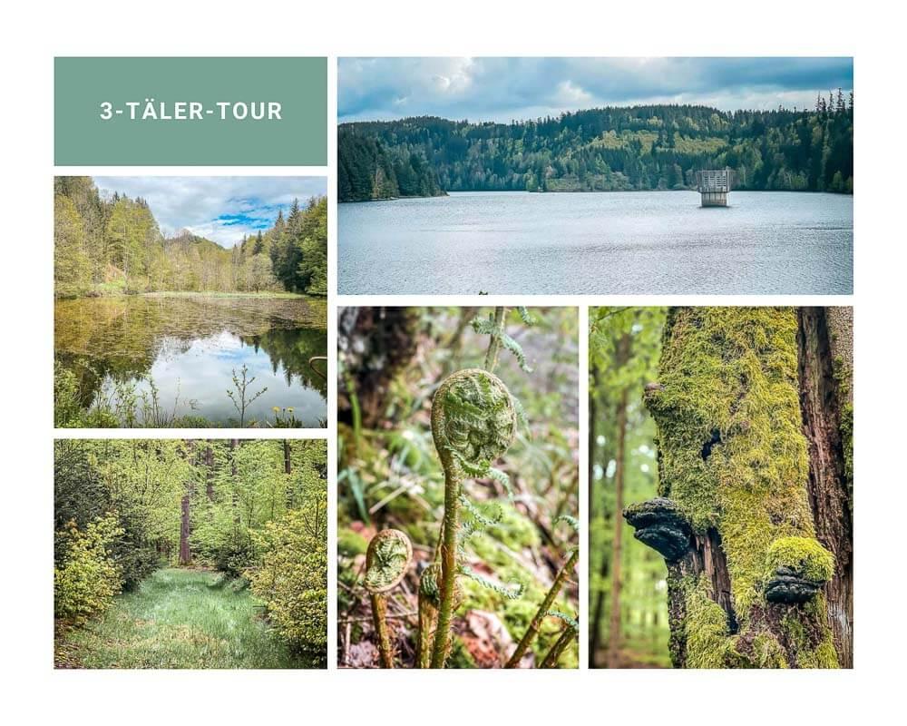 Frankenwald wandern auf der 3 Täler Tour an der Ködeltalsperre