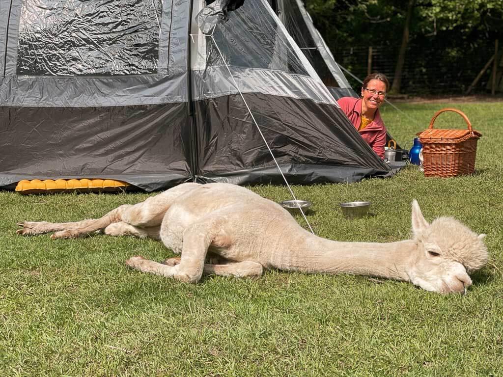 Couchflucht Sabrina Bechtold beim Zelten auf der Alpaka-Weide von Daniels Kleiner Farm