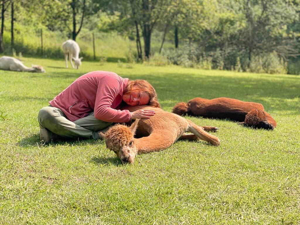 Couchflucht Sabrina Bechtold kuschelt mit Alpaka auf Daniels Kleiner Farm
