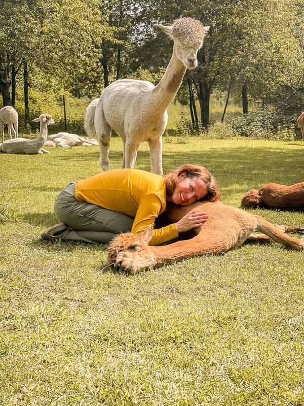 Couchflucht Sabrina Bechtold kuschelt mit Alpakas auf Daniels Kleiner Farm